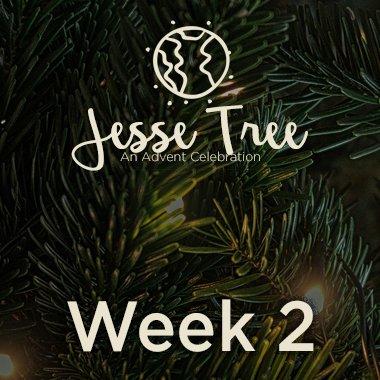Jesse Tree Web 2