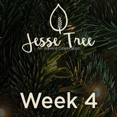 Jesse Tree Web 4