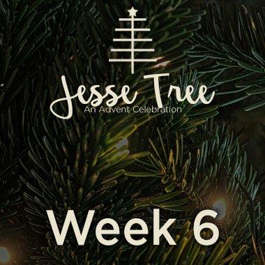 Jesse Tree Web 6