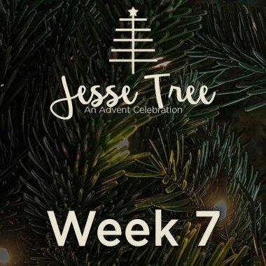 Jesse Tree Web 7